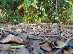 Importancia de la materia orgánica en el suelo