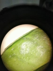 Mosca blanca en hoja de cítricos