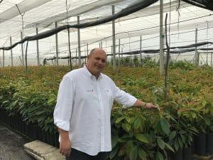 Comprar plantas de aguacate al mejor precio