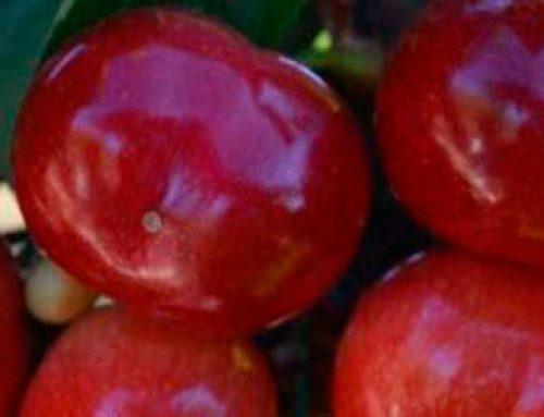 Beneficios de la glicina betaina en plantas